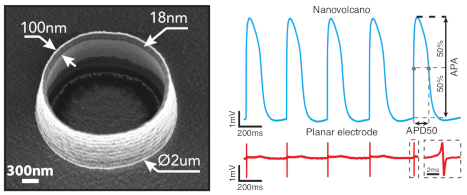 Intracellular Recording of Cardiomyocyte Action Potentials with Nanopatterned Volcano-Shaped Microelectrode Arrays