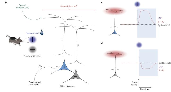 A deep learning framework for neuroscience