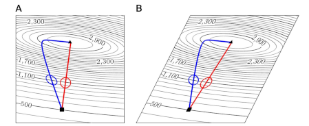 On the choice of metric in gradient-based theories of brain function