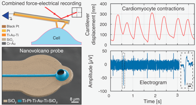 Volcano-Shaped Scanning Probe Microscopy Probe for Combined Force-Electrogram Recordings from Excitable Cells