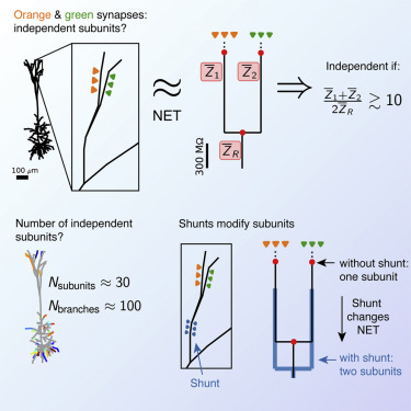 Electrical Compartmentalization in Neurons