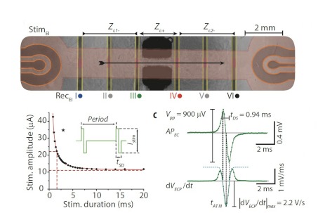 High-speed mechano-active multielectrode array for investigating rapid stretch effects on cardiac tissue